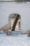 Baum im Bogen in den Ruinen Stockfotografie