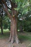 Baum im botanischen Garten Lizenzfreie Stockbilder