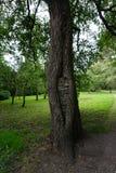 Baum im botanischen Garten Stockfotografie