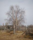 Baum im Dorf Stockfotografie
