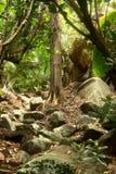 Baum im Dschungel stockfotografie