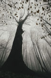 Baum im dunklen furchtsamen Wald mit Nebel im Herbst Lizenzfreies Stockfoto