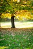 Baum im Fall Stockfotos