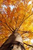 Baum im Fall von unterhalb Stockfotografie