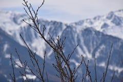 Baum im Fokus mit Bergen im Hintergrund Stockbild