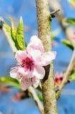 Baum im Frühjahr Stockbilder