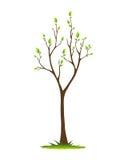 Baum im Frühjahr Stockbild