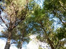Baum im Freien Stockbilder