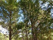 Baum im Freien Stockfoto