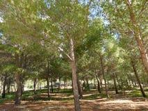 Baum im Freien Lizenzfreie Stockfotos