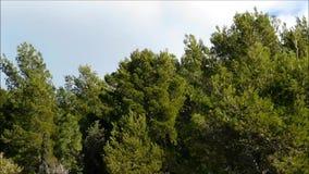 Baum im Freien stock footage