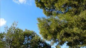 Baum im Freien stock video