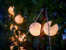 Baum im Freien mit verzierten Kreislichtern, Lampenlicht Stockfotografie