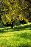 Baum im fruchtbaren Gras Stockfotos