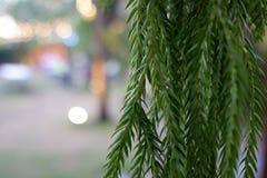 Baum im Garten stockfotos