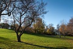 Baum im Garten Stockbild