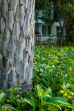 Baum im Garten stockbilder