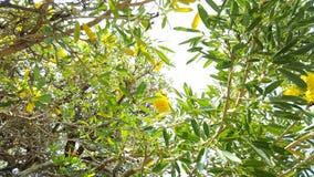 Baum im Garten lizenzfreies stockfoto