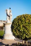 Baum im Garten des Tuileries Lizenzfreie Stockfotografie