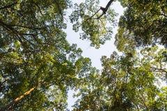 Baum im grünen Wald Stockfotos