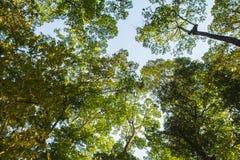Baum im grünen Wald Stockbild