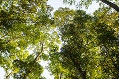 Baum im grünen Wald Stockfotografie