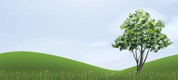 Baum im Hügelbereich des grünen Grases mit blauem Himmel Stockbilder