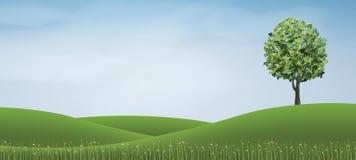 Baum im Hügelbereich des grünen Grases mit blauem Himmel Stockfoto