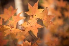 Baum im Herbst lizenzfreie stockfotos