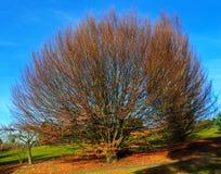 Baum im Herbst Lizenzfreie Stockbilder