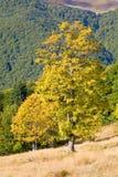 Baum im Herbstberg Lizenzfreie Stockfotografie