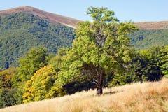 Baum im Herbstberg Stockfoto