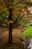 Baum im Herbstregen stockfoto