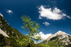 Baum im herrlichen alpinen Tal an einem sonnigen Sommertag Stockfotografie