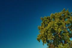 Baum im Himmel lizenzfreies stockfoto