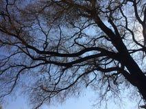 Baum im Himmel Lizenzfreie Stockfotos
