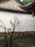 Baum im Hof Stockfotos