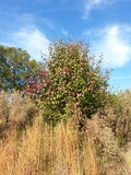 Baum im hohen Gras Stockbilder