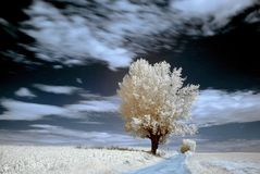 Baum im Infrarot, Landschaft mit Baum, Sepia Stockbild