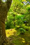 Baum im japanischen Kirchhof Lizenzfreies Stockfoto