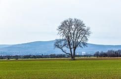 Baum im ländlichen Gebiet Stockfotografie