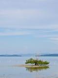 Baum im Meer. Stockfotos