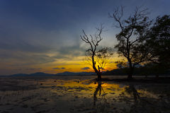 Baum im Meer im Sonnenuntergang Lizenzfreies Stockbild