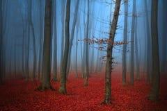 Baum im mystischen Holz während des Herbstes Stockfoto