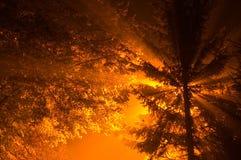 Baum im Nebel Stockfoto