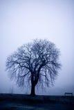 Baum im Nebel Lizenzfreies Stockfoto