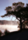 Baum im Nebel Lizenzfreie Stockfotografie