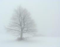 Baum im Nebel Stockbild
