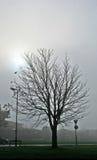 Baum im Nebel Stockbilder