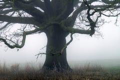 Baum im Nebel auf einer Wiese Stockfotografie